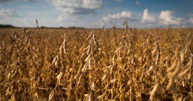 Produção de soja cresce 43,5% em oito anos no Estado